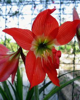 Lu Hias Dinding Lu Tidur Motif Bunga smart ebook bunga bakung bunga