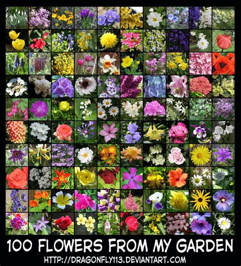 100 flowers from the 100 flowers from my garden by brigitte fredensborg on