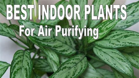 top   indoor plants  air purifying youtube