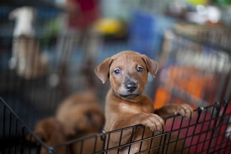 the puppy shop most toxic pet store items toxic flea and tick collars