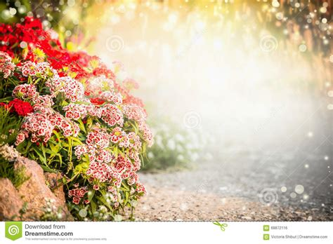 flower garden background beautiful flowers garden background turkish carnation