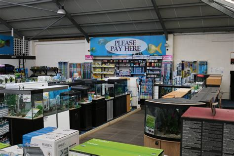 aquarium design centre aquatics hollybush garden centre and aquaria staffordshire