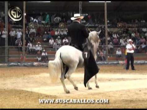 caballo de la sabana youtube imponente de la libertad paso fino en envigado 2010 rey