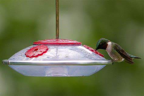 easily stop hummingbird feeder leaks