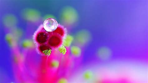 hd photography wallpaper flowers droplets wallpapers hd pictures one hd wallpaper