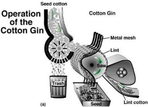 cotton gin diagram what s ginning 1266780 meritnation
