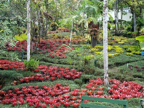 wilson botanical gardens wilson botanical garden travel logs palmtalk