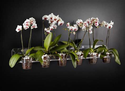 orchidea vaso trasparente vasi per orchidee orchidee modelli di vasi per orchidee