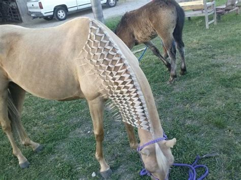 hairstyles for horses horse show hairstyles hairstylegalleries com