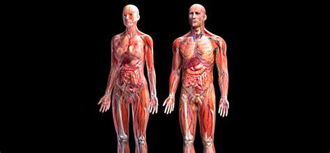 fotos del interior del cuerpo humano las partes del cuerpo humano en hd y reales taringa