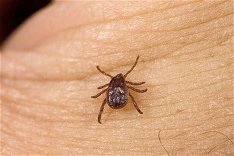 brown ticks pest
