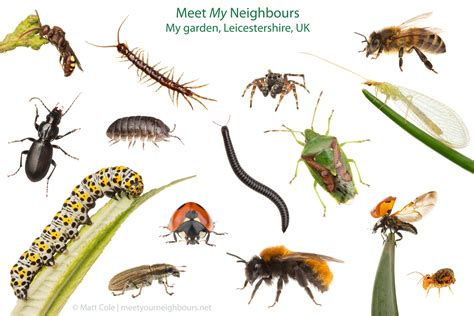 Insect Garden Pests - common garden pests images