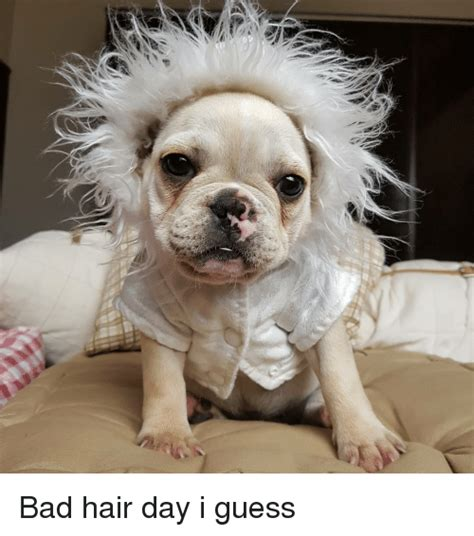 Bad Hair Day Meme - 25 best memes about bad hair bad hair memes