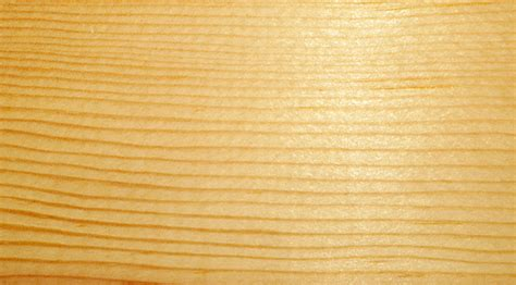 Kiefer Maserung by Pinus Ponderosa Fact Sheet