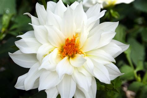images of beautiful flowers flower homes beautiful white flowers