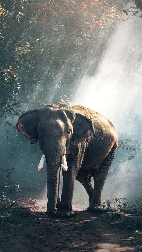 Elephant Iphone Wallpaper elephant iphone wallpaper 74 images