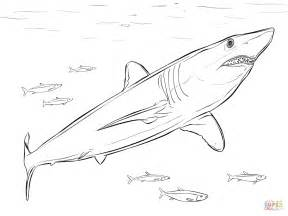 mako template shortfin mako shark coloring page free printable