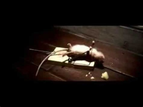 eye of the tiger mouse commercial funny mouse trap cheese commercial no animal abuse youtube