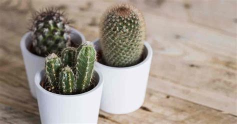 everything about wood cactus potting soil how to make the best soil for succulents