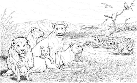 lion coloring pages realistic realistic lion coloring pages