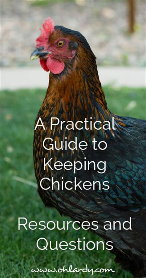 Backyard Chickens Faq A Practical Guide To Keeping Backyard Chickens Resources