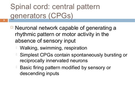 video pattern generator ppt reflex and voluntary control of movement