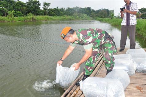 Bibit Ikan Nila Bogor pusdiklat paskhas tebar 1 500 bibit ikan nila www