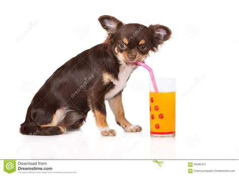 can dogs drink orange juice view topic can i a trenta 174 salty smoothie salt chicken smoothie