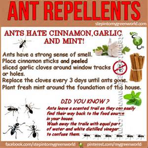 step into my green world stepin2diy ant repellents