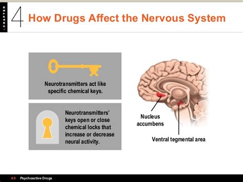 section 35 5 drugs and the nervous system psychology 101 chapter 4