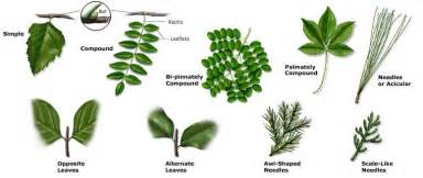Why collect or identify plants when you identify plants you learn