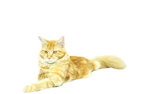 falso positivo test di test felv nel gatto falso positivo o guarigione tutto