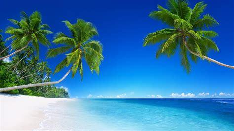 download wallpaper laut biru wallpaper pantai pantai laut biru hijau sawit