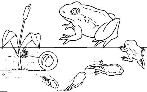 frog eggs coloring page grandma bonnie s closet preschool lesson from tadpoles