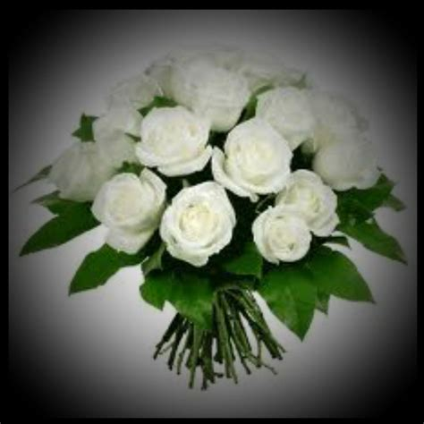 imagenes de rosas blancas para facebook imagenes de rosas blancas para facebook image rosa blanca