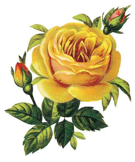 imagenes png online im 225 genes png y mucho m 225 s flores png