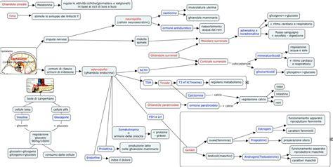 ossitocina alimenti ghiandole endocrine ok