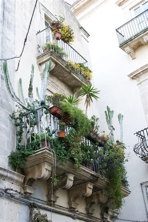 plants for apartments planet succulent balcony garden apartment gardening