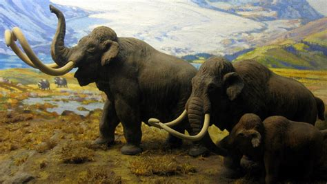 wallpaper north american mammals mammoths hd animals