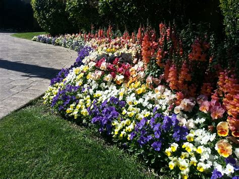 16 Best Images About Annual Color Design On Pinterest Pansy Garden Ideas