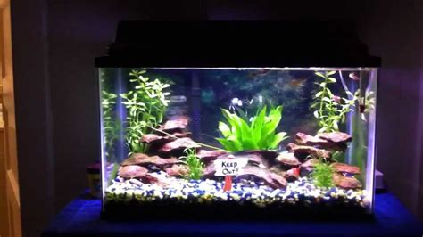 Guppies Fish Tank Decorations by Guppy Aquarium Guppy Aquarium Setup 2017 Fish Tank