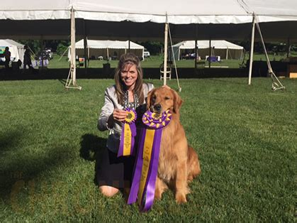 hudson valley golden retriever club hudson valley golden retriever specialty friday june 10 2016 canine chronicle