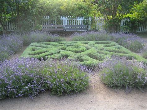 herb garden plants knot garden design plants to use for herb knot gardens