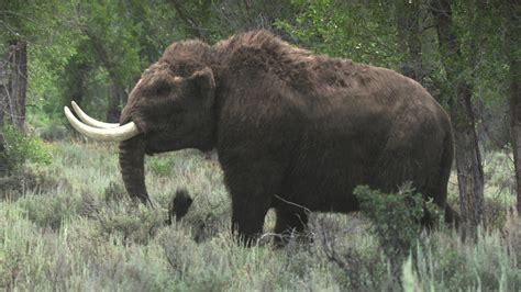 wooly mammoth ice age 1000 images about beasts of the past on pinterest
