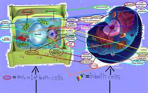 Nothing found for photographzkca plant cell animal cell venn diagram