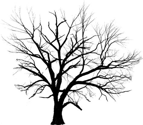 drawings of tree line drawings of trees clipart best