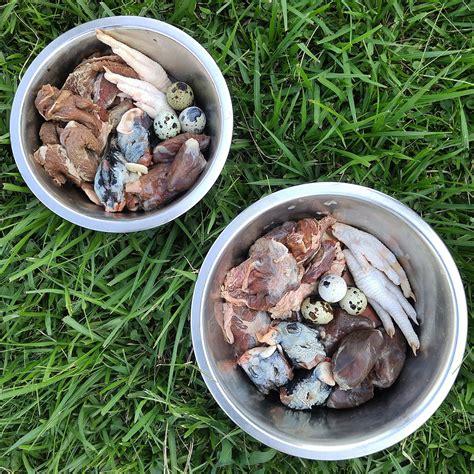 feeding dogs chicken prey model diet for dogs pmr