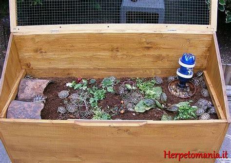 alimentazione tartarughe di terra piccole riproduzione tartarughe terrestri