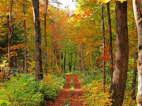best fall colors in usa somedaytrips best fall colors in acadia national park