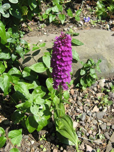 rock garden plants uk rock garden plants uk the greatest rock garden plants